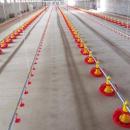 Automatic Floor Feeding System