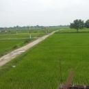 Land on sale 2.41 bigha – Butwal, Bhalwari, Tilottama – 7, Rupandehi Nepal